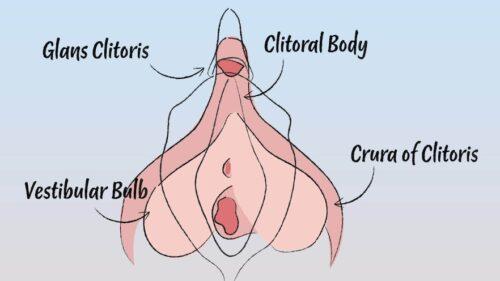 Da li uopšte postoji vaginalni orgazam?
